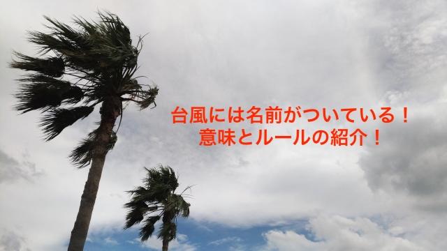 台風 ヤシの木